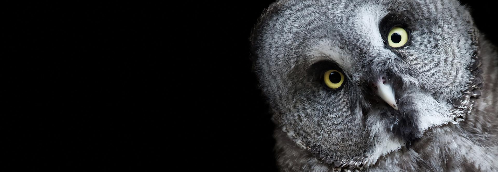 EE_header_owl